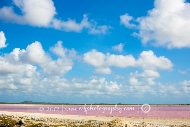 Amazing pink water at the saltpans, Sorobonne beach, jibe city, Bonaire beach Eef Ouwehand Commerciele fotografie